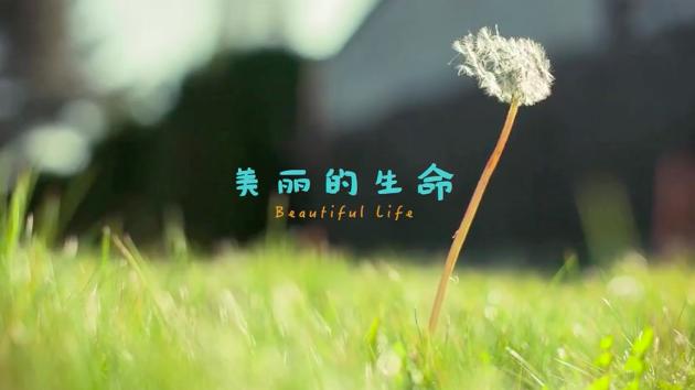美丽的生命封面-美刻视频
